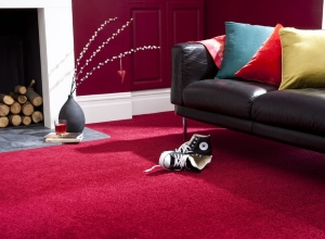 Flooring - More Than Beds, Bangor